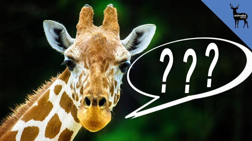 Việt Nam và Câu hỏi Hươu cao cổ (The giraffequestion)
